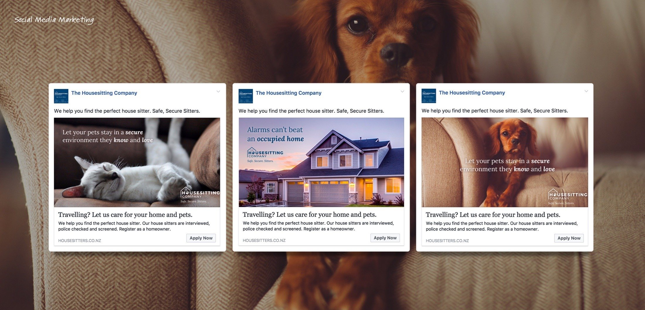 Social Media Marketing - Housesitting Company